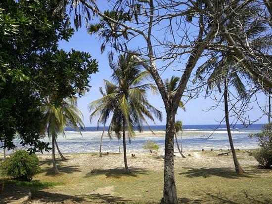 Фотография Tiwi