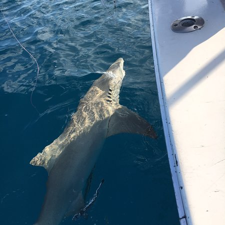 Key West Fishing Connection - Private Charters: photo0.jpg