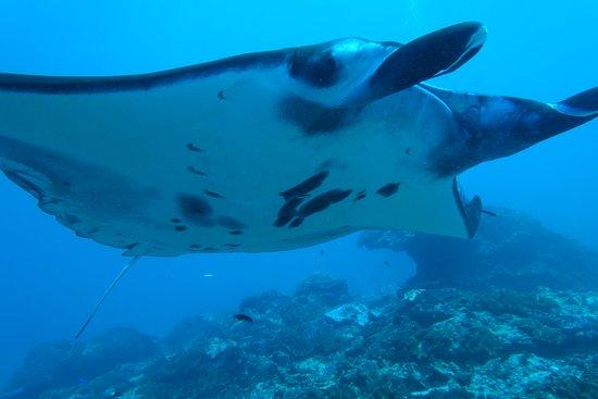 Bali Diving Academy Lembongan: Manta point