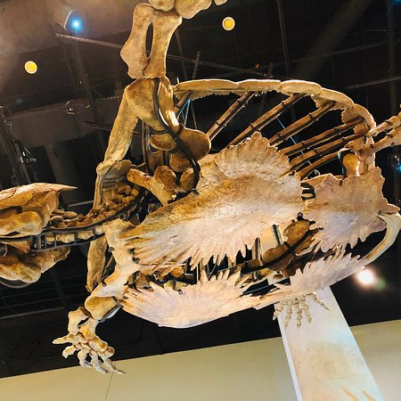 Perot Museum of Nature and Science: photo8.jpg