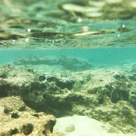Sharks Cove ภาพถ่าย