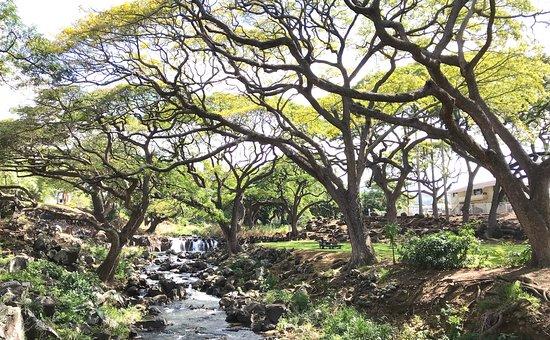 300 Garden Walk: 300 Yard Walk Through Liliuokalani Botanical Gardens To
