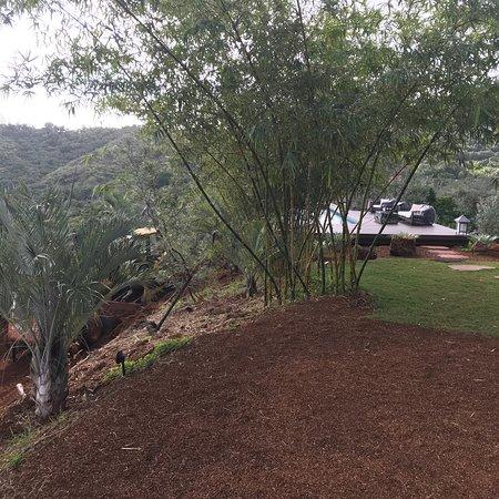 The Palmwood: photo7.jpg