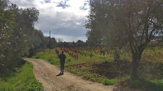 Calonge, España: La viña del abuelo.