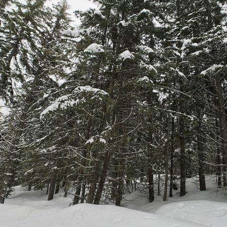 Whistler, Kanada: photo0.jpg