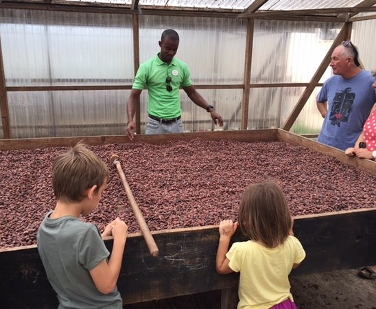 Belmont, Grenada: Drying the cocoa beans.