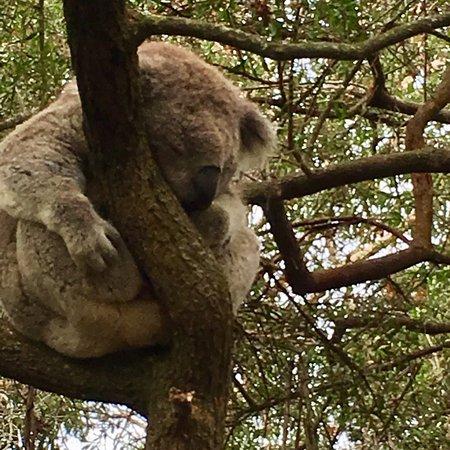Cowes, Australia: photo0.jpg