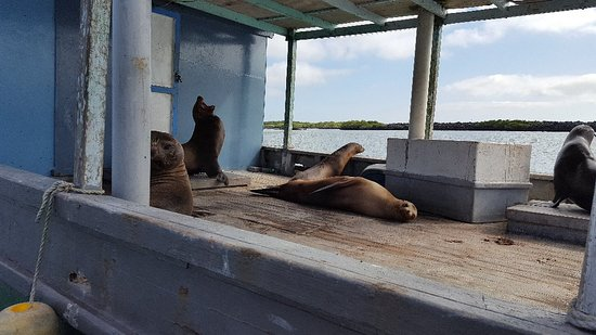 Puerto Villamil, Ekvador: 20180309_164805_large.jpg