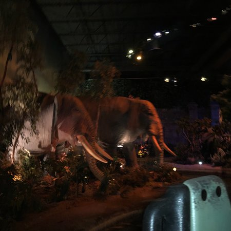 Rainforest Cafe: photo0.jpg