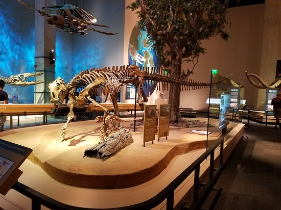 Perot Museum of Nature and Science: 20180310_130952_large.jpg
