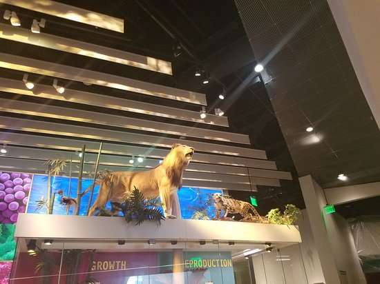 Perot Museum of Nature and Science: 20180310_140822_large.jpg