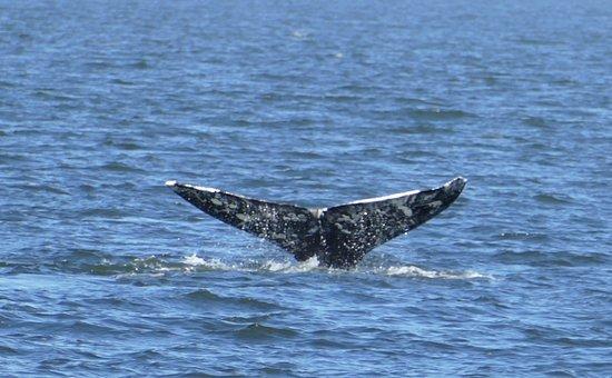 Puget Sound Express - Day Trips: 1070928~2_large.jpg