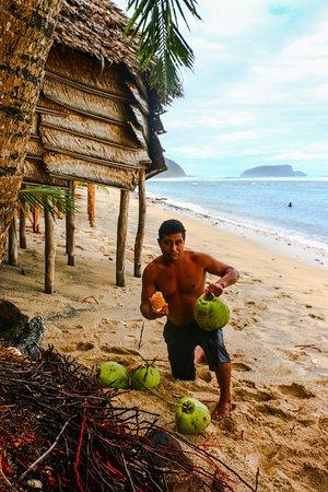 Saleapaga, Samoa: Man ready to husk the coconut