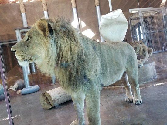 Cheyenne Mountain Zoo: 20180311_140712_large.jpg
