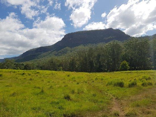 Numinbah Valley صورة