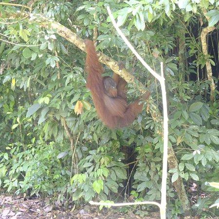 Danum Valley Conservation Area, Malasia: photo2.jpg