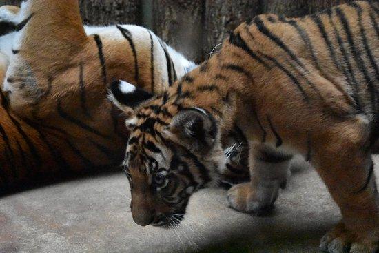 Zoo Praha: DSC_0637_large.jpg