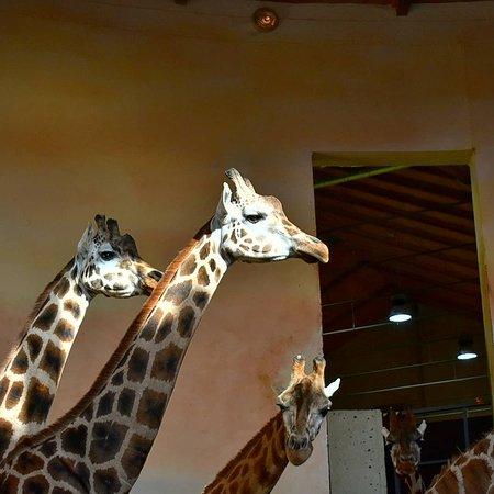 Zoo Praha: IMG_20180310_182513_513_large.jpg