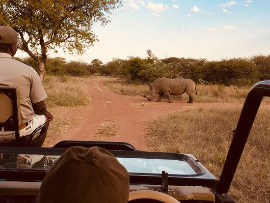 Hammanskraal, South Africa: White rhino