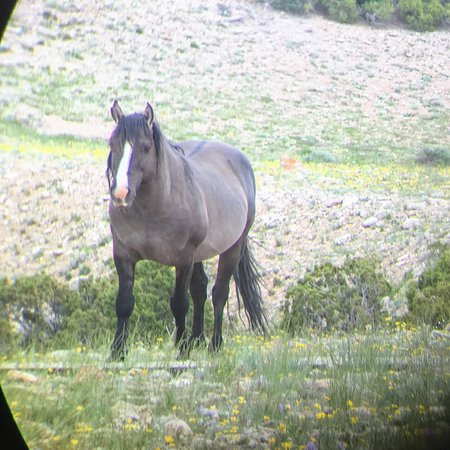 Pryor Mountain Wild Mustang Center Lovell 2018 All You