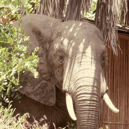 Selous Game Reserve, Tanzania: photo1.jpg