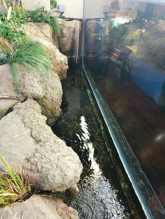 Fuji Yusui no Sato Aquarium: IMG_20180310_115144_large.jpg