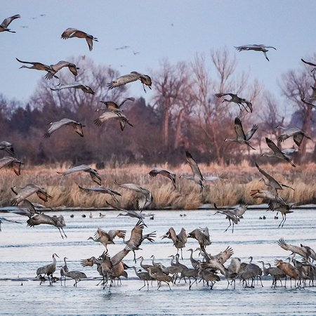 A Night With The Sandhill Cranes At The Crane Trust In >> Observe The Cranes Returning To River For Night From The Blind