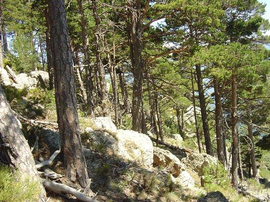 Reserve Naturelle de Jujols