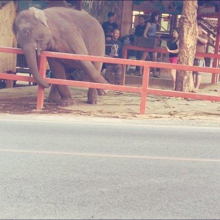 Seaview Elephant Camp: photo0.jpg