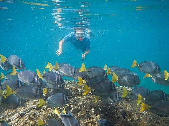 Isla de Coiba, Panama: Snorkelling at Coiba