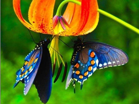 Jardin Botanico del Quindio: Colorido Natural