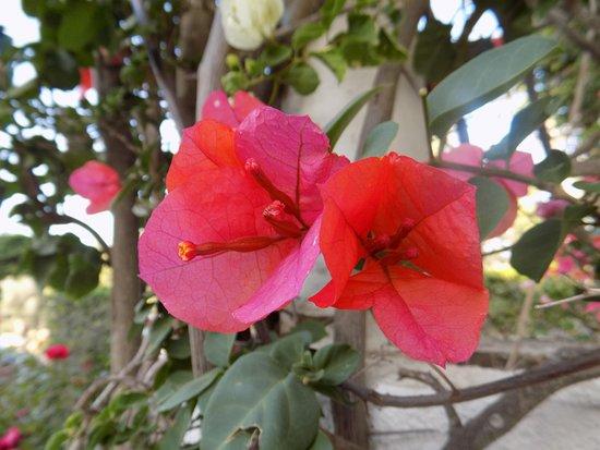 Dona Ana Garden: Flowers on grounds