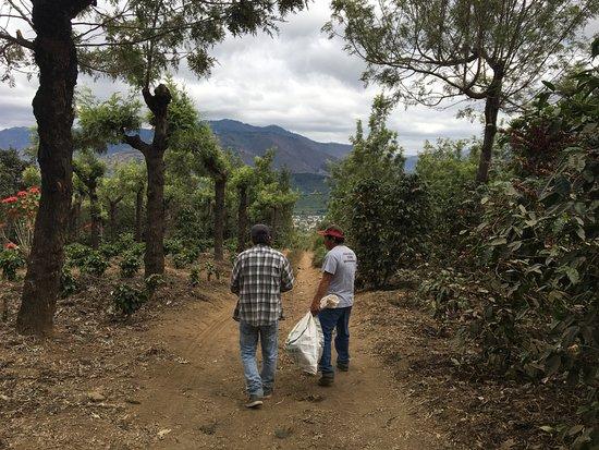 Ciudad Vieja, Guatemala: Walk into the plantations