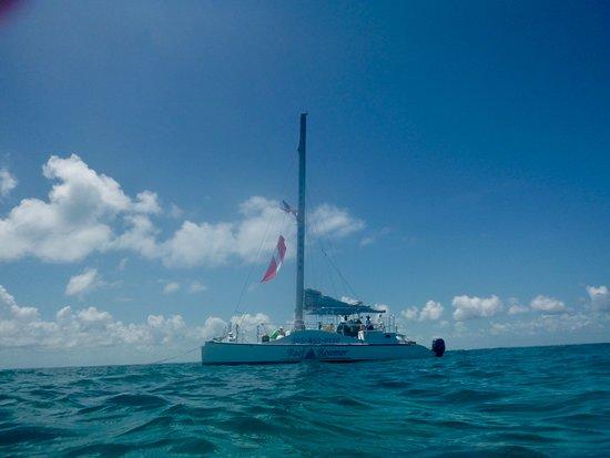 Reef Roamer Snorkel: Reef Roamwer