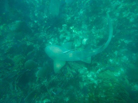Reef Roamer Snorkel: Reefshark