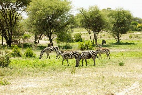 Tarangire National Park Image