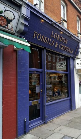 London Fossils and Crystals - 2019 All You Need to Know