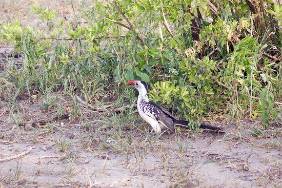 塔蘭吉雷國家公園照片