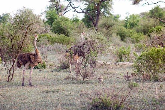 Tarangire National Park Photo
