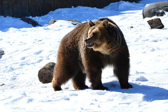 Montana Grizzly Encounter: Don't mess with me!