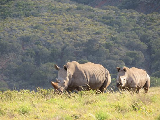 Amakhala Game Reserve Picture