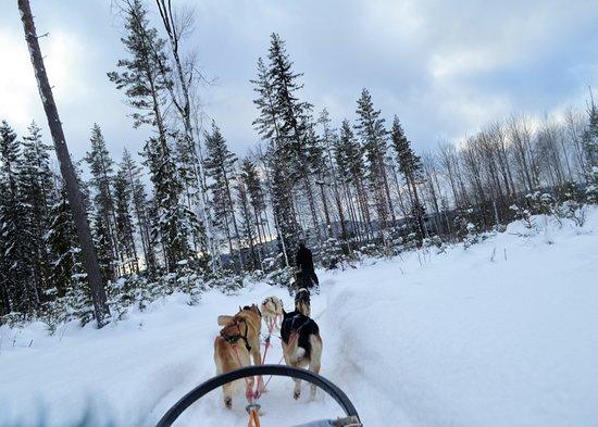 Korskrogen, สวีเดน: Trip took us through forests and across frozen lakes