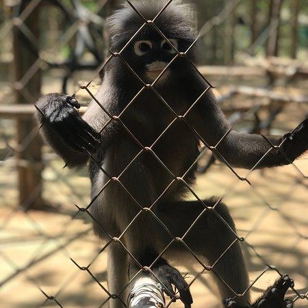 Wildlife Friends Of Thailand Lohnt Es Sich Aktuelle 2018