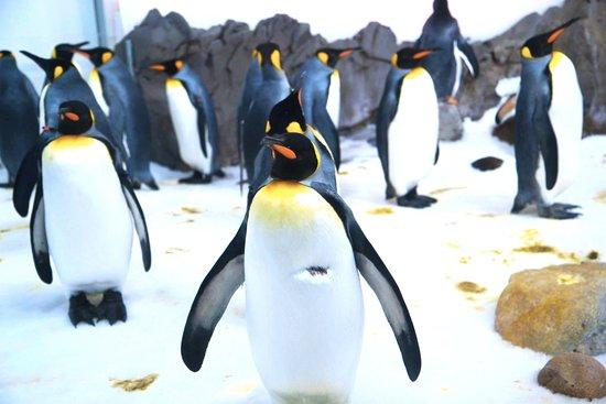 SEA LIFE Melbourne Aquarium: Ho visto per la prima volta i pinguini reali durante la mia visita all'acquario di Melbourne.