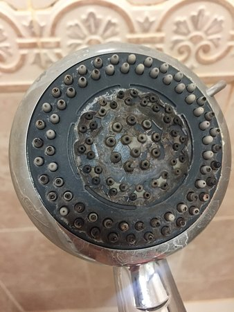 Bexhill-on-Sea, UK: SHOWER HEAD. - YUK