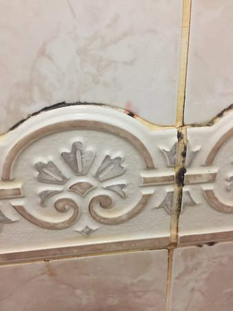 Bexhill-on-Sea, UK: MOULDY TILES