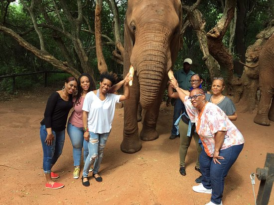 Camps Bay, South Africa: Elephant Sanctuary