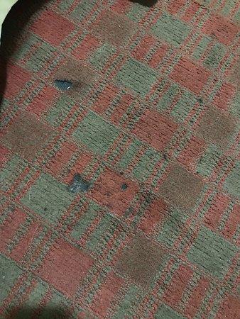 Elmsford, NY: Carpet in room