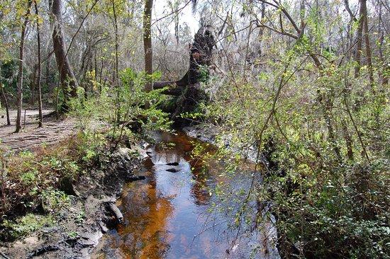 Jacksonville Arboreteum & Gardens: view from trail