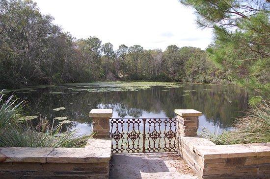 Jacksonville Arboreteum & Gardens: lake view